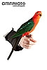 red and green parakeet