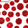 red gerbera pattern