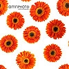 orange gerbera pattern