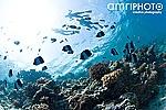 underwater photographer maldives